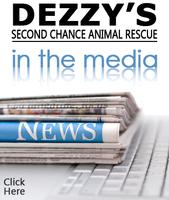 DEZZY'S SECOND CHANCE Animal Rescue in the news