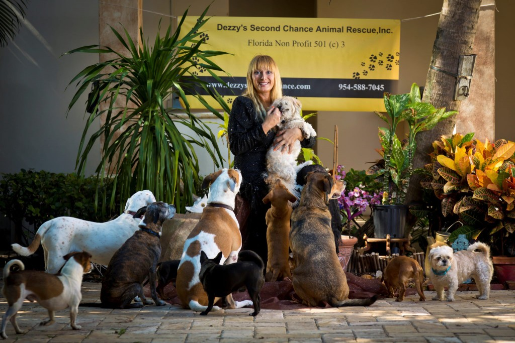 animal rescue We help over 2,200 animals annually, through shelter, adoptions, and also services such as obedience training and animal cruelty investigation.